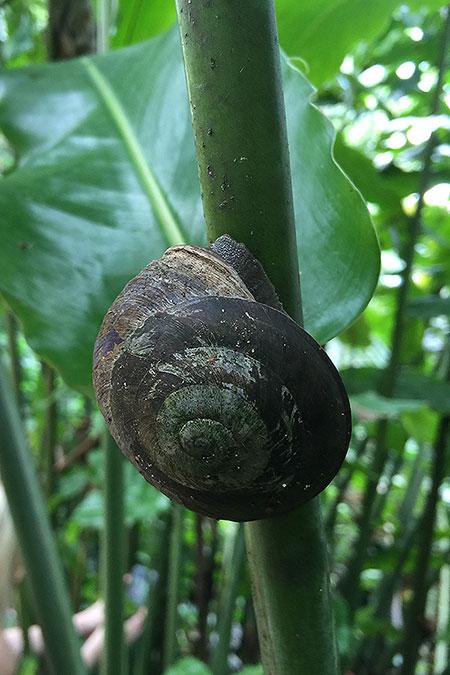 wp_pr_snail