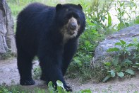 Queens Zoo - Bear