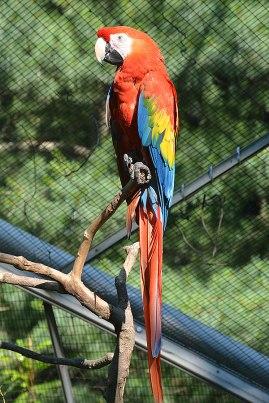 Queens Zoo - Parrot