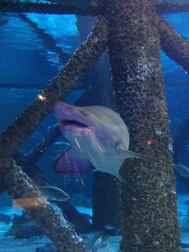 Shark, New Orleans Aquarium