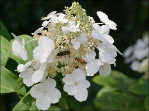Bees, Queens Botanical Garden